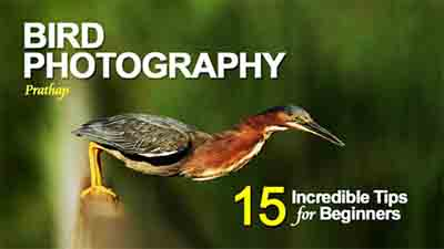 ebook photographers bird-photography