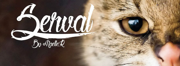 serval best tattoo font